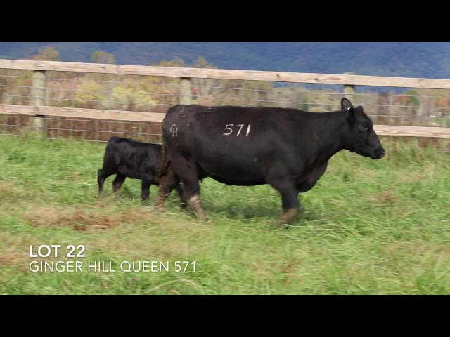 Ginger Hill Angus Lot 22