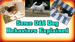 ♥ ♥ ♥ Puppy Training ►Odd Dog Behaviors Explained◄ Dog Training :)))))))))))