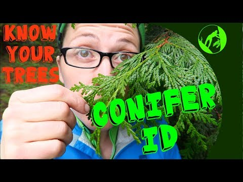 Know Your Trees - Conifer Identification