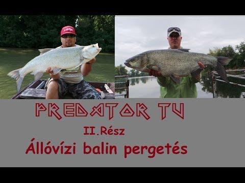 Predator TV II. Állóvízi balin pergetés