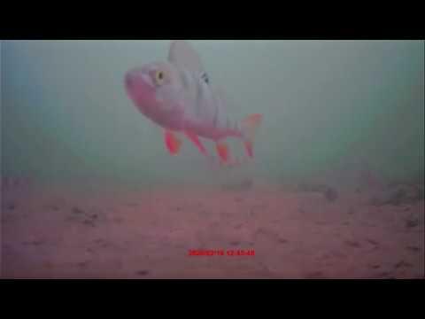 Здравствуйте, друзья! Видео о подводном мире Дядьковского затона. Приятного просмотра.