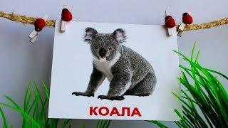 Карточки Домана Животные Развивающее видео для детей от 0 до 3 лет Учим названия животных