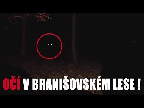 BRANIŠOVSKÝ LES - Paranormal Stupidity #5