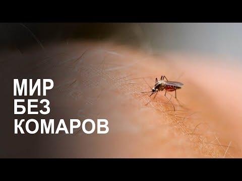 Что если ВСЕ комары вымрут