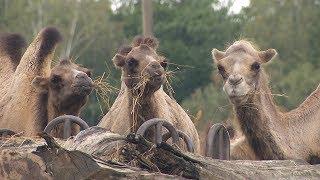Zoo Ostrava - pokazowe karmienia zwierząt