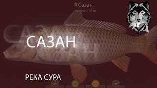 RF4 РР4 Русская Рыбалка 4 Река Сура Сазан Толстолобик