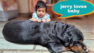 Rottweiler and Babies are best friend||funny dog videos.