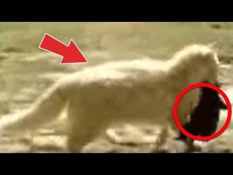 Diese Katze entführt ständig Welpen, der Grund ist unglaublich!