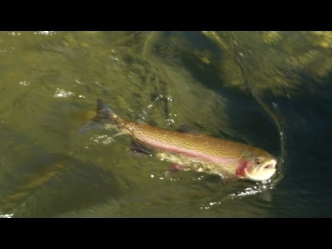 Fly Fishing In Tahoe South
