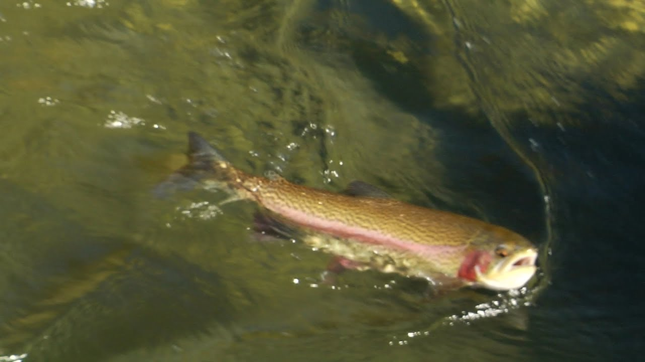 Fly fishing in tahoe south youtube for Tahoe fly fishing