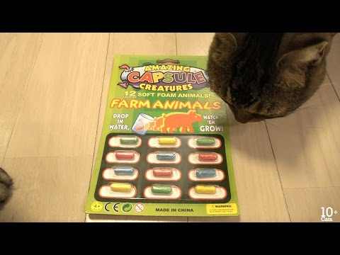 Amazing Capsule Creatures 水で膨らむおもちゃで遊ぶ猫たち