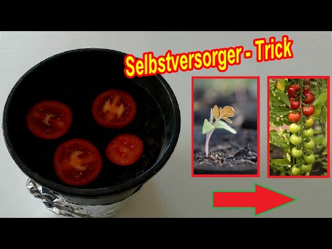 tomaten selber ziehen lifehack tomatenscheiben. Black Bedroom Furniture Sets. Home Design Ideas
