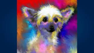 Китайская хохлатая собака (Chinese Crested Dog)