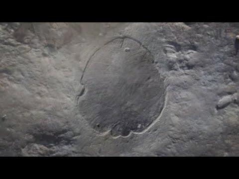 Este é Dickinsonia, o animal máis antigo da Terra