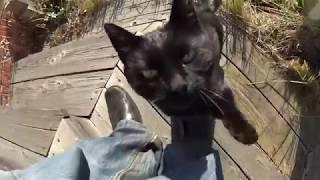Черная Кошка Пришла к Дому