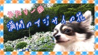京都府舞鶴市にある『舞鶴自然文化園』へ遊びに行ってきました。 http:/...