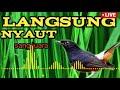 Masteran Paling Di Cari Cocok Buat Isian Murai Kacer Kenari Cendet Lovebird Pleci Kolerbri  Mp3 - Mp4 Download