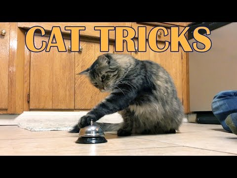 Korben's fav Cat Tricks!