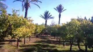 Immobilier Marrakech - Terrain à vendre 1/2 .wmv