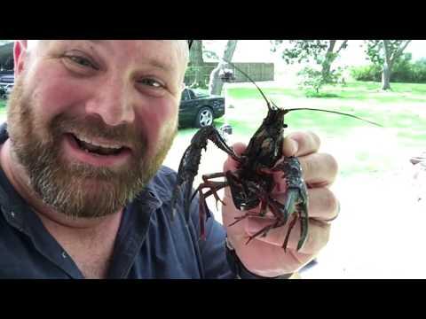 How To Boil Crawfish Like Thecajunblaze