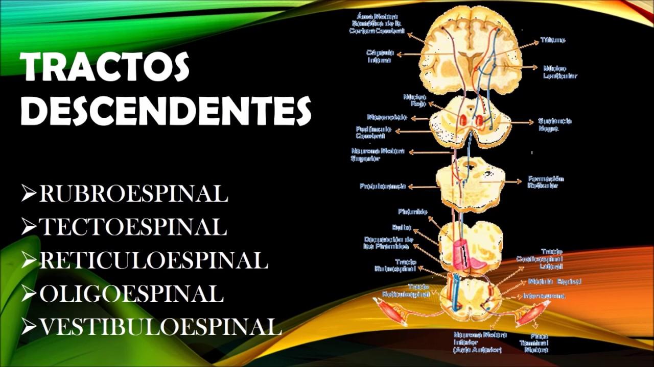 Piramidales y sintomas extrapiramidales