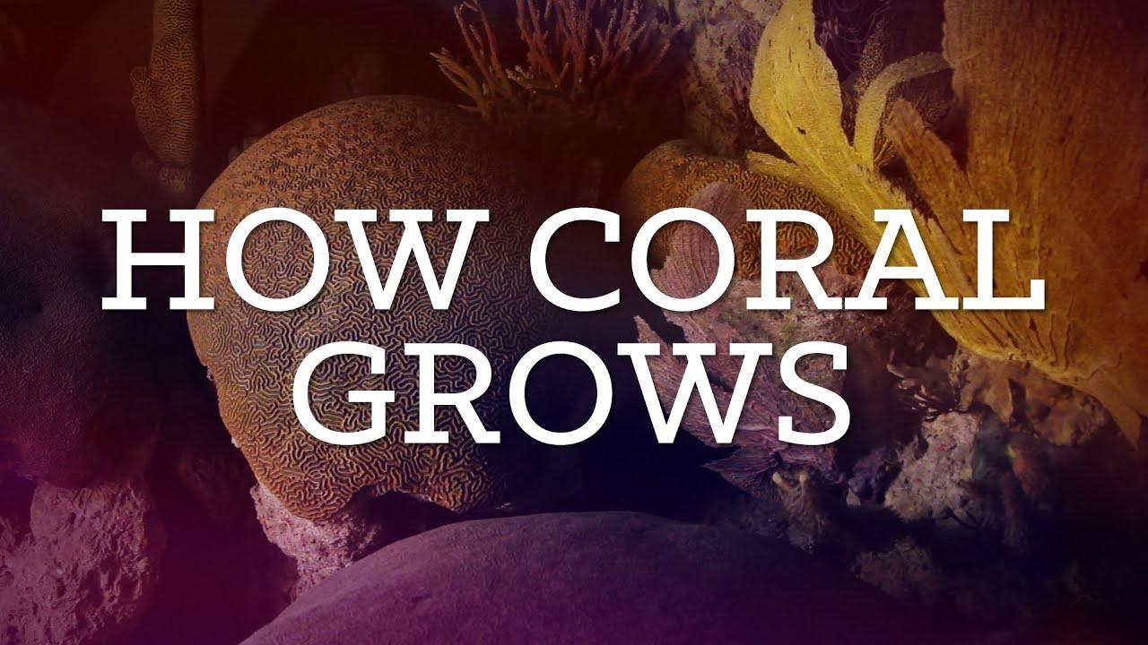 How Coral Grows | Diorama | PBS Digital Studios - YouTube