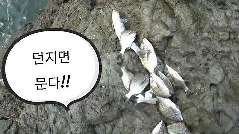 [바다낚시] 가덕도 기도원 감성돔낚시 던지면 문다!! 갱상도 부부의 코믹 낚시!! real fishing