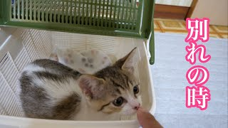【保護猫】新しいボランティアさんの所へ旅立ちました