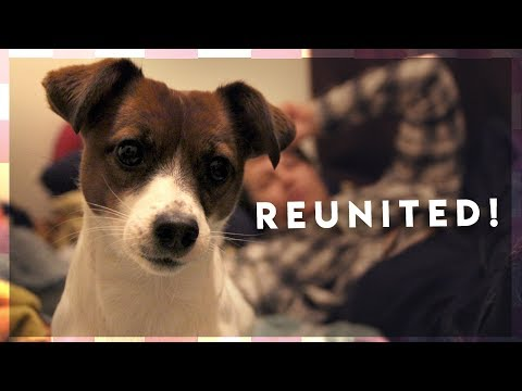 Reuniting with our Dog & Family! | Wedding Vlog 1