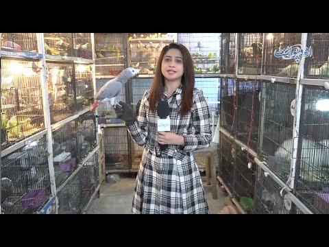 Famous Tollinton Market Lahore - Pets and Birds Market