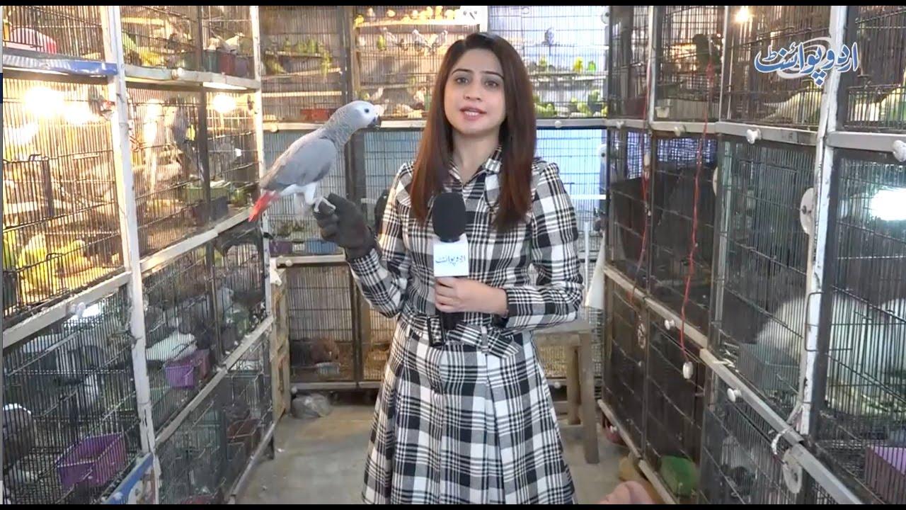 Cat Cage Olx