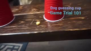 Dog guessing cup game... german shepherd