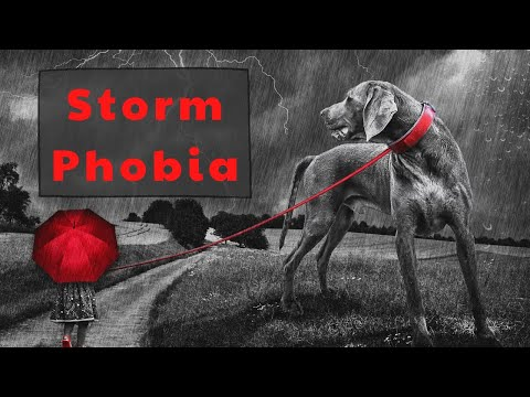 Dog Anxiety, Scared Dog And Why Dogs Are Scared Of Thunder   Natural Ways To Help A Fearful Dog
