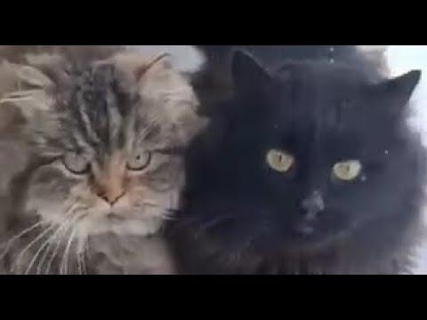 Самые умные кошки в мире / The smartest cats in the world