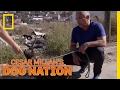 Rescuing a Street Dog in Tijuana | Cesar Millan's Dog Nation