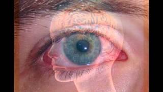 Топ 5 интересных фактов о глазах