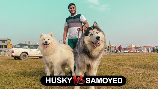 Sultan's First Dog Show | Part 2 |
