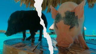 GoPro: A Caribbean Paradise • Roatan HONDURAS