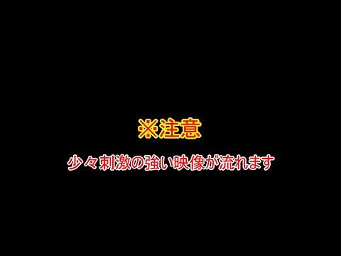 【育児・成長】帝王切開で出産の瞬間【出産・誕生】