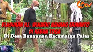 LIPUTAN4 TV. Sedang Apa Hj. Winarni Nanang Ermanto Bersama Kades Bangunan Isnaini  di Kebun Toga ??