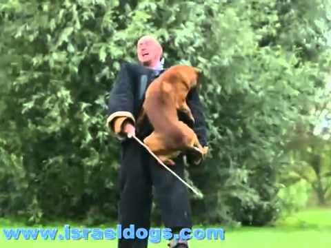 Israeldogs- Great Dog Attacks(360p_H.264-AAC).mp4