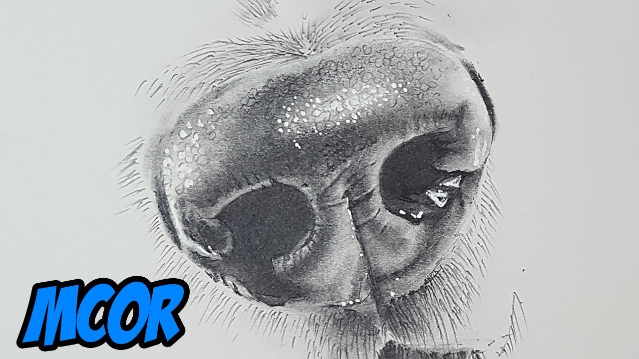 Como Dibujar Nariz De Perro Realista A Lapiz Tutorial Youtube