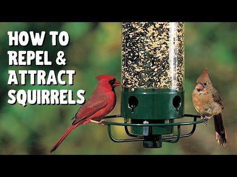 How To Repel & Attract Squirrels From Bird Feeders 🐦🐿