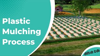 Plastic Mulching Process