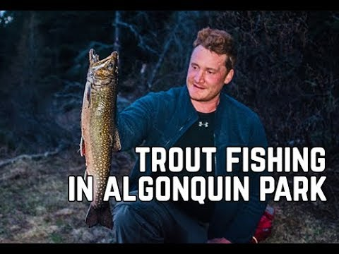 Algonquin Park Spring Brook Trout Fishing Trip With My Self Reliance & Ted Baird Pt. 1