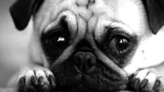 Zwierzęta mają uczucia !!!