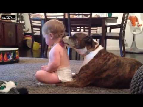 zapwordd dog washing a baby / chien lave bébé
