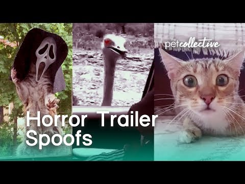 Horror Movie Trailer Spoofs | The Pet Collective