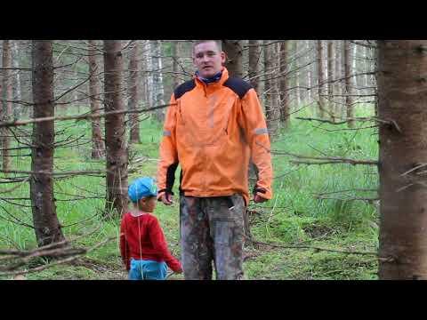 Metsa kasvartuse ABC (Juurepess kuusikutes)