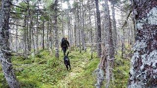 NL Explorer: A Fall Night Camping Under the Tarp